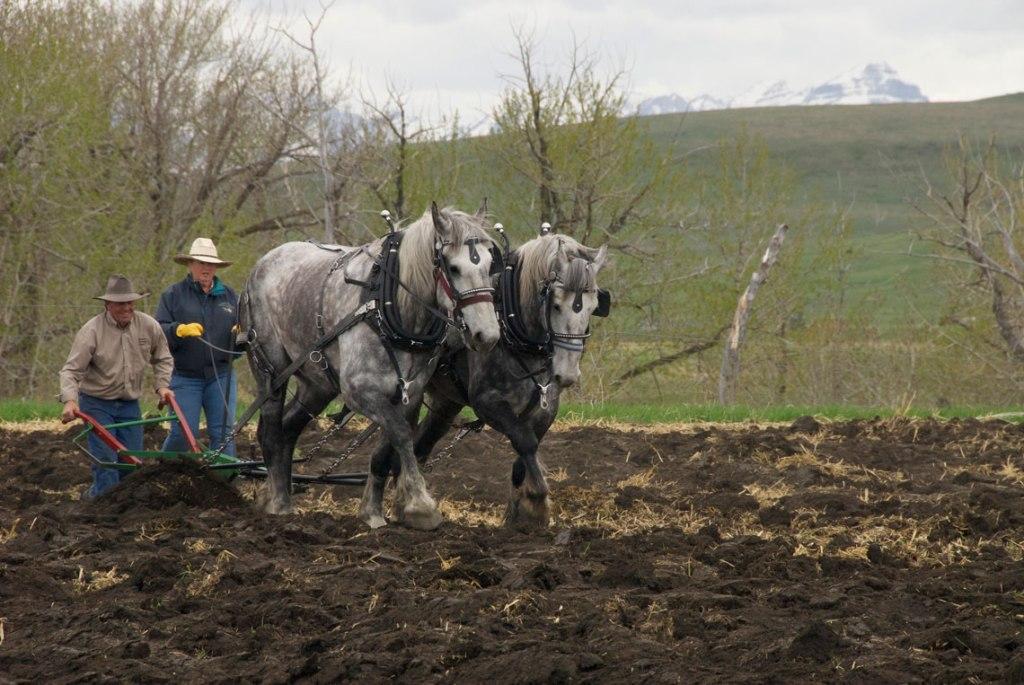 Walking Plow – Alberta Carriage Supply