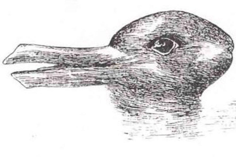 illusione ottica coniglio o papera