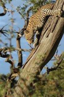 Wildlife_klein-09