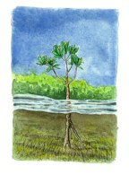 Young Mangrove Plant