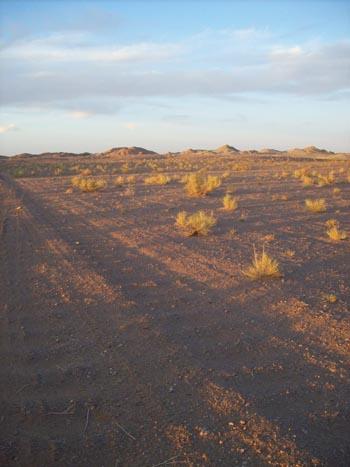 desiertoWP