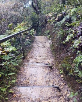 path 4 Expedition to Mount Kinabalu