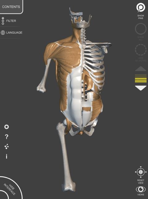 Anatomie voor de kunstenaar