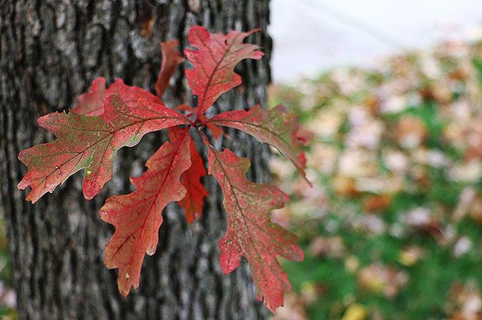 fall15-4