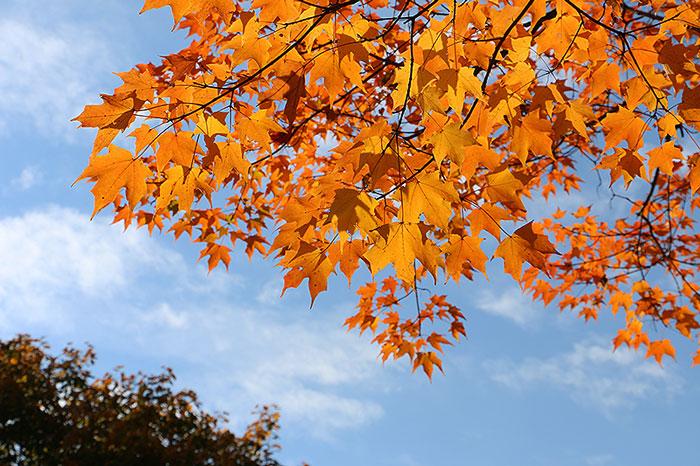 fall15-5