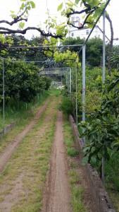 imagen de una huerta ecológica