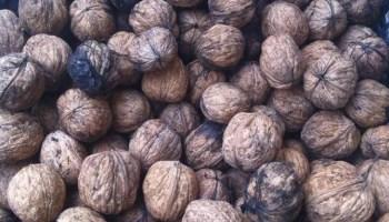 imagen de nueces cultivo local en alborinco