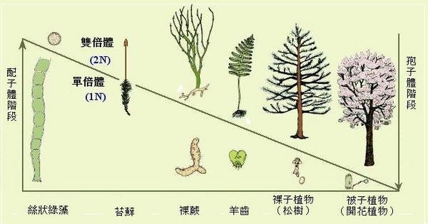 植物的演化趨勢 - 加百列的部落格 - udn部落格