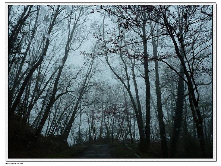 觀霧的雲光山色 - 晨曦的山中花園 - udn部落格