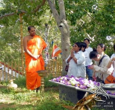 8. 小樹也能成就一個大城市---Sri Maha Bodhi Tree(Anuradhapura)---2009.01.28 - harmony 的部落格 - udn部落格