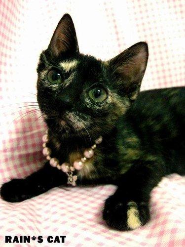 """給玳瑁貓一個機會好嗎?小可愛""""黛比-Debby""""開放認養!(貓咪已經送出^^) - 林雨潔貓咪中途之家 - udn部落格"""
