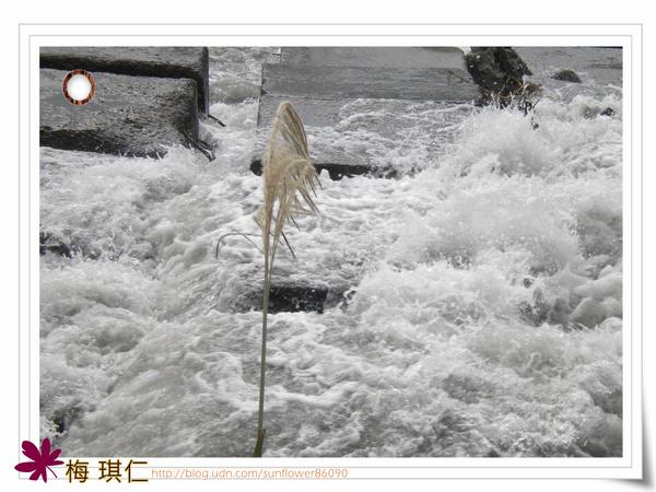 在水一方的菅芒花 - 梅琪仁的部落格 - udn部落格