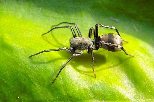 蟲蛛的擬態與偽裝 - 空心竹的部落格 - udn部落格