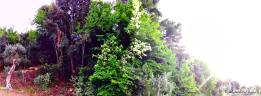 #ForestaUmbra #Gargano #WeAreInPuglia #VisitPuglia - Zona del Convento - Rodi Garganico