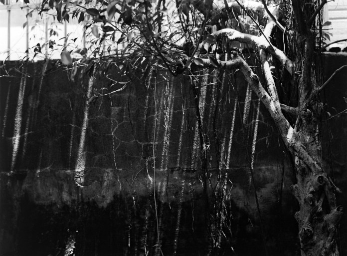 Air roots - Fuji Acros 100 shot at ISO100. Black and white negative film in 120 format shot as 6x4.5.