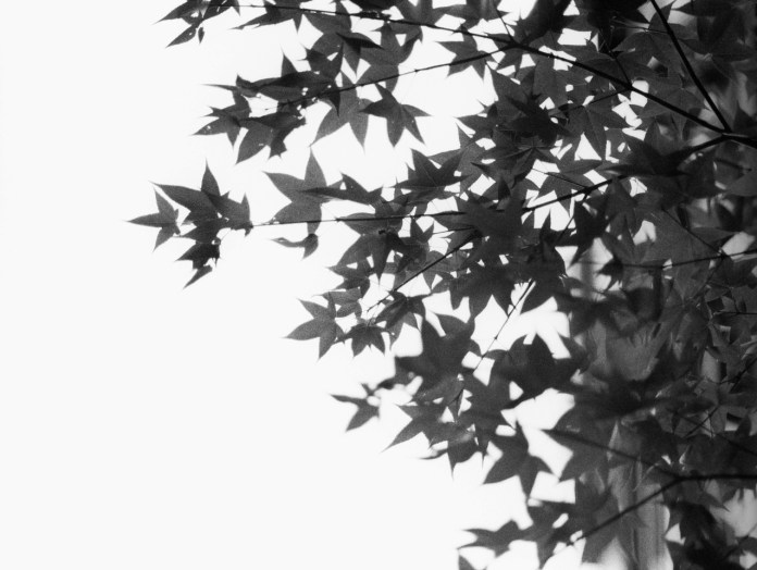 Lobed - Shot on ILFORD HP5 PLUS at EI 400. Black and white negative film in 120 format shot as 6x4.5.