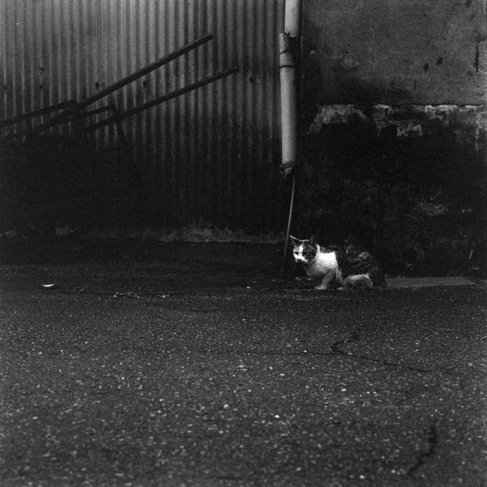 Kodak Tri-X 400 shot at EI25600