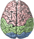 Albuquerque Brain, Mind & AI group icon