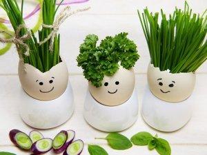 Les 5 aliments à manger bio en priorité