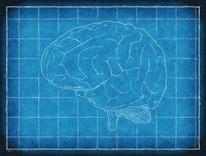 """""""Les compétences que le cerveau peut acquérir sont infinies"""""""
