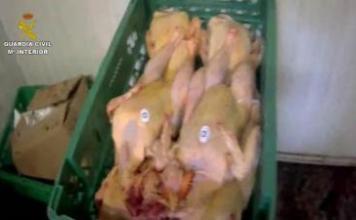 carne humanes