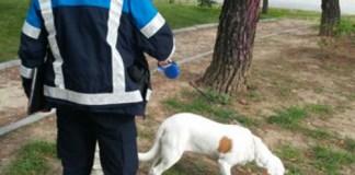perros potencialmente peligrosos campaña alcorcon
