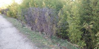 zonas verdes secas_