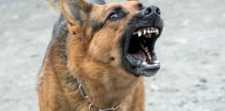 Getafe Perro peligroso