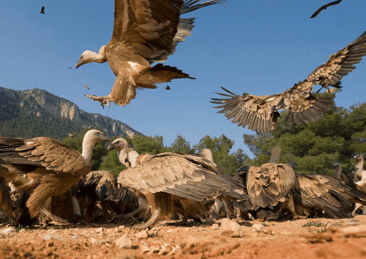 Observatorio de aves Mas de Bunyol