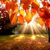 Adiós al verano, mañana inicia el otoño