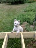 My dog Doby inspecting the framing