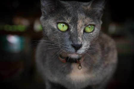 Green eyed cat shot with Samsung NX1 16-50mm f/2 OIS Lens
