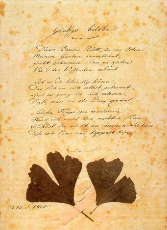 Manuscrito del poema de Goethe: Ginkgo biloba