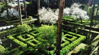 Melocotoneros en flor del Jardín de las Damas