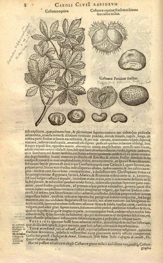 """Castanea equina, en la obra de Carolus Clusius """"Rariorum plantarum historia"""" (1601)"""