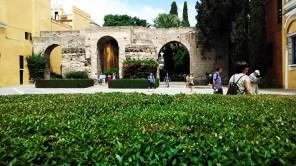 Arrayán en el Patio de la Montería, Real Alcázar de Sevilla