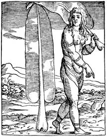 """Hojas de plátano, en Gonzalo Fernández de Oviedo, en """"Libro secondo delle Indie occidentali. Summario de la naturale et generale historie de l'Indie occidentali"""" (Venecia, 1534)."""