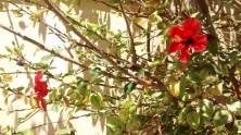 Flores de Pacífico