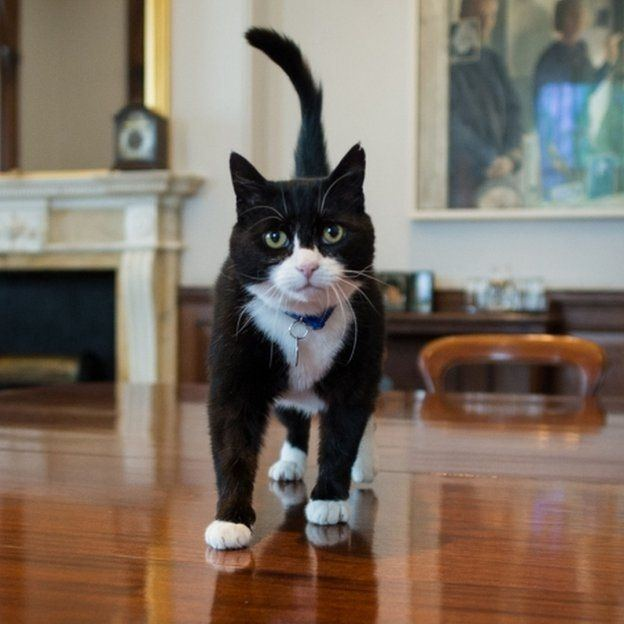 Palmerston (cat) - Alchetron, The Free Social Encyclopedia