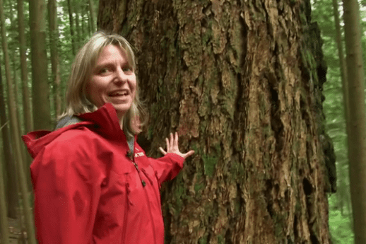 Conservation at the university of british columbia, has studied that unappreciated underworld. Suzanne Simard Alchetron The Free Social Encyclopedia