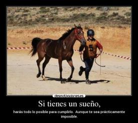caballosweb1 - copia