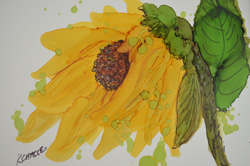 Sunflower 250
