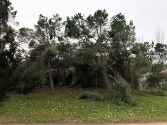 Persisten los trabajos de limpieza tras la borrasca Filomena en Alcorcón