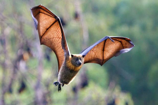 bats-spain-rabies