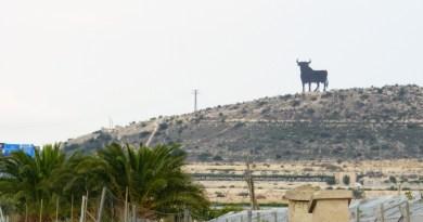 Osboune-bull-Alicante