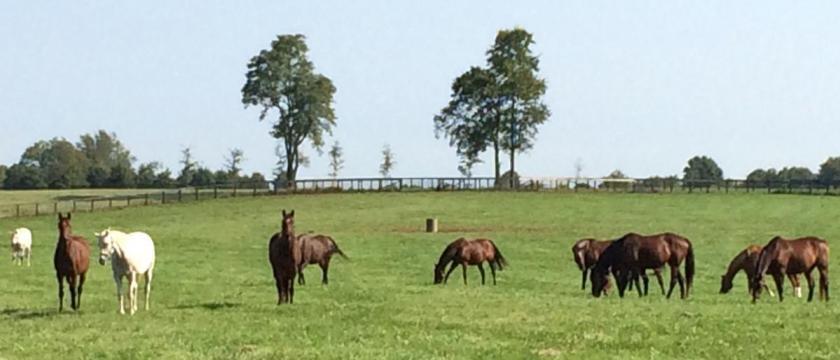 Grassy field, trees, horses