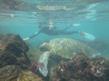 Good times chomping on algae