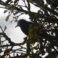 Love Birds - National Nest Box Week