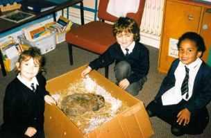 Pets at school - Chocolate the rabbit.