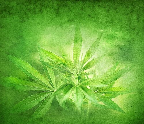 Justicia y Salud favorecen penalizar venta marihuana sintética